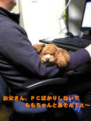 SBSH0114_convert_20090317203817.jpg