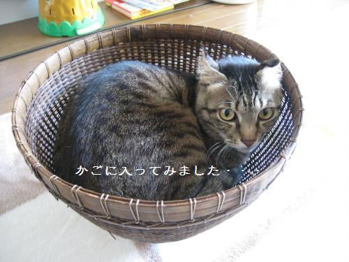 かご猫ラオ