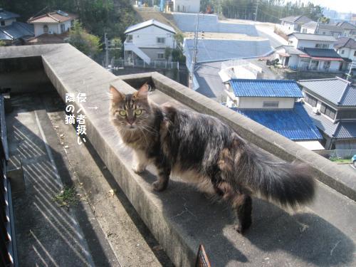 侵入者 隣の猫