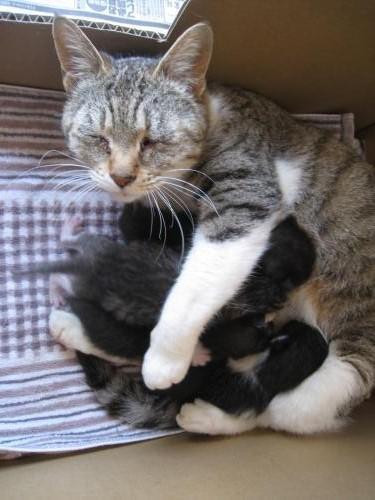 野良猫母さん