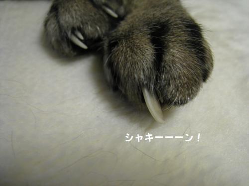とらの爪2