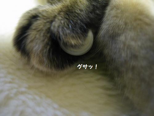 とらの爪3