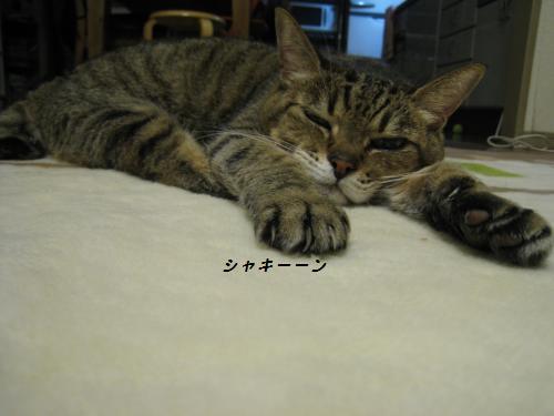 とらのお手手2.