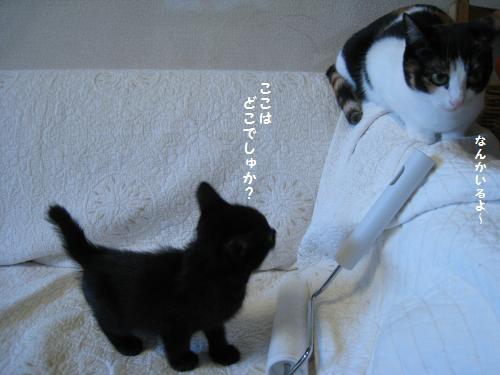 マロン対ネネちゃん