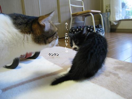 ミーちゃん対風ちゃん