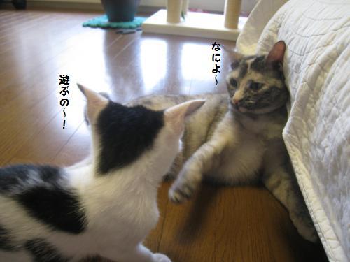まめ子ちゃん3