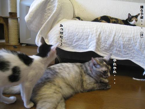 まめ子ちゃん4