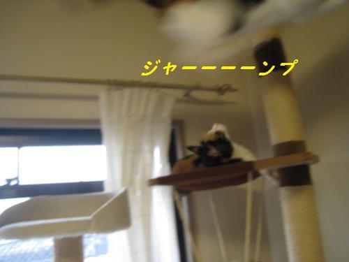 マロン飛ぶ
