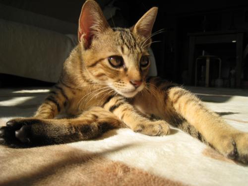 お日様と猫2