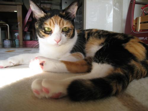 お日様と猫4
