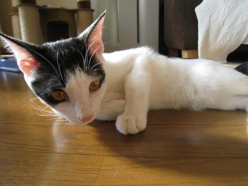 お日様と猫6