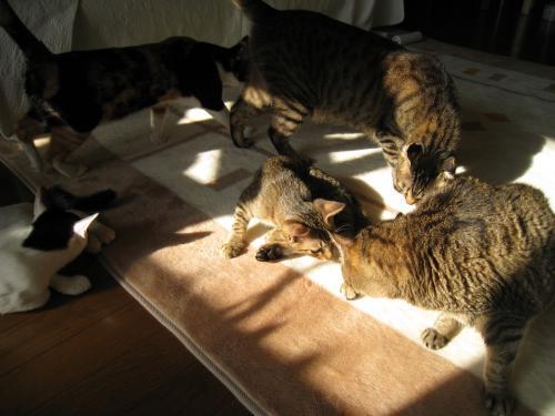 お日様と猫7