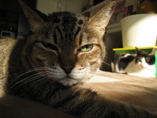 お日様と猫8
