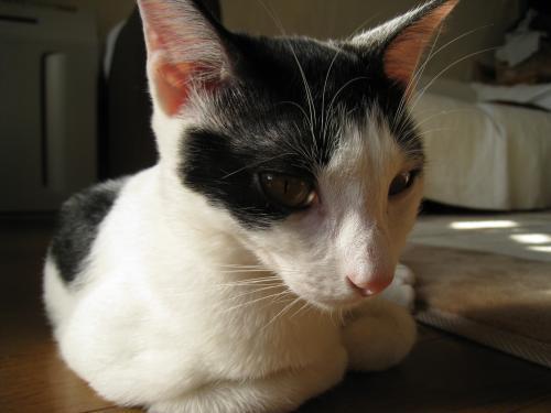 お日様と猫9