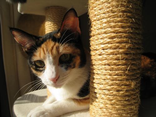 お日様と猫11