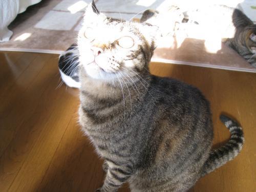お日様と猫12