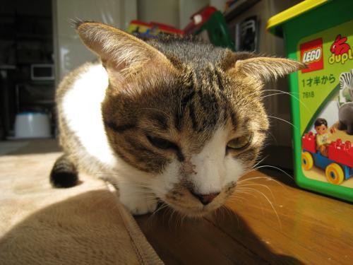 お日様と猫14
