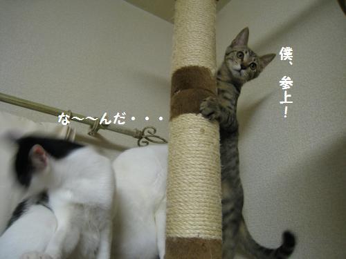 変なまめ子7