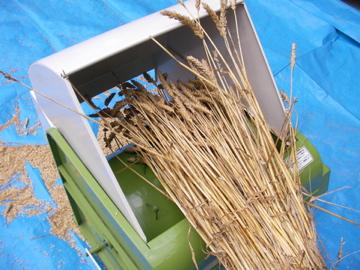 小麦脱穀1