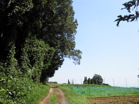 初秋の農道89