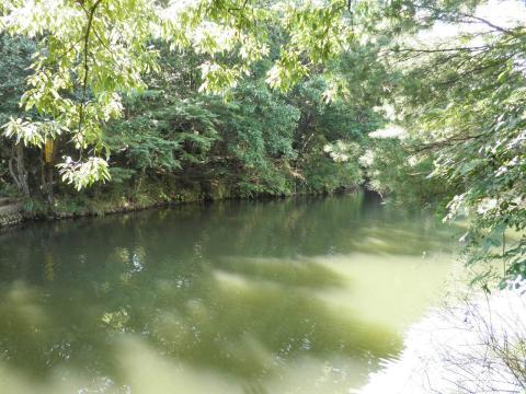 水面の緑123