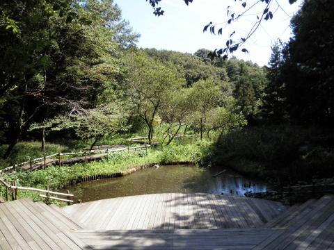 わきみずの谷の池48