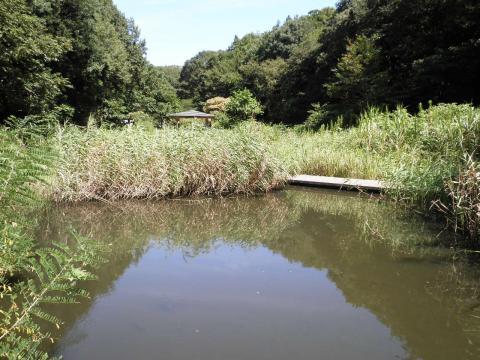湿生生態池13