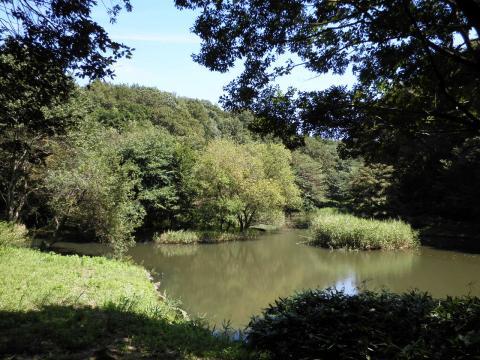 水鳥の池18