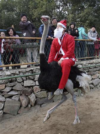 サンタ、ダチョウに乗る