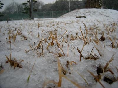 かなり湿った雪でした