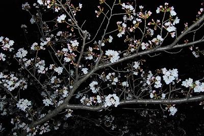 この木は結構咲いてました