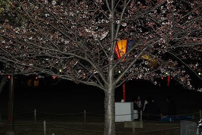 この木はまだまだです