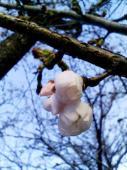 桜のつぼみ店前