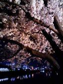お花見夜景