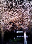 夜桜も綺麗ですよね。