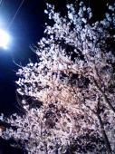 夜桜も綺麗ですよね3