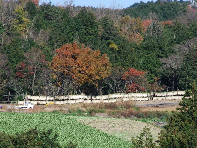 daikonhosi1