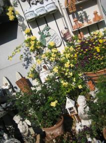 黄色が咲き出した