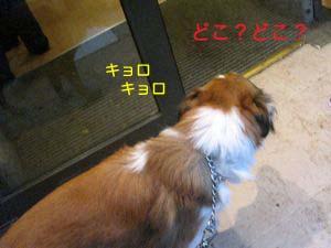 2008011708.jpg