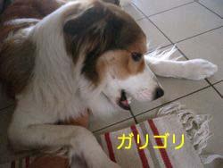 2008011906.jpg
