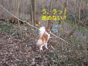2008012409.jpg