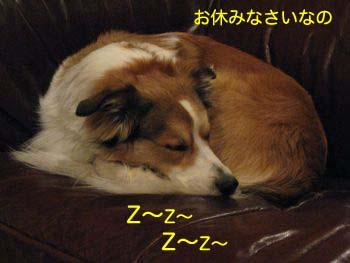 2008012608.jpg
