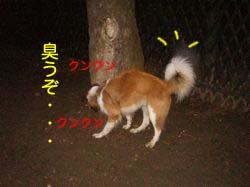 2008013012.jpg
