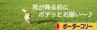 2008030411.jpg