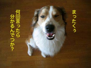 2008030601.jpg