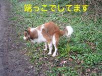 2008031102.jpg