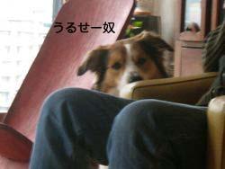 2008031108.jpg