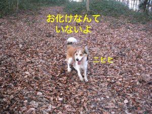 2008031311.jpg