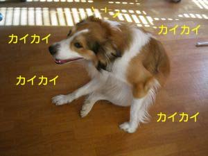 2008031807.jpg