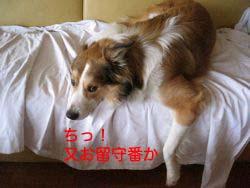 2008032610.jpg